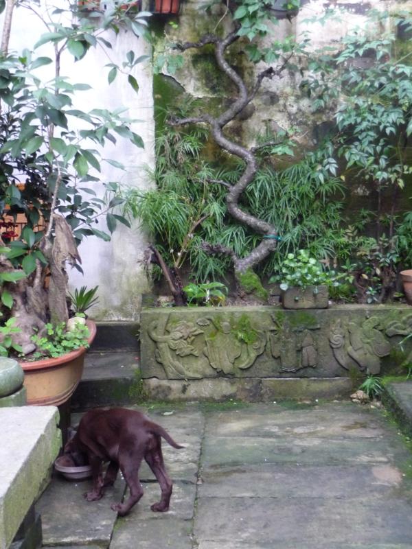 garden with puppy!